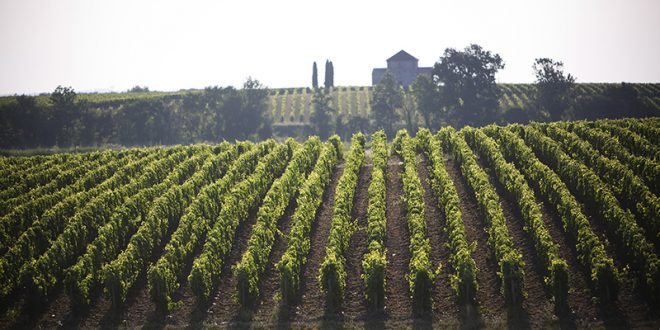 Primeurs 2016: die Top Appellationen des linken Ufers